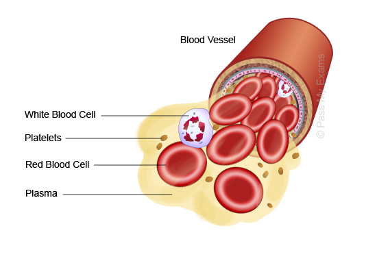 composition of blood List of human blood components jump to navigation jump to search this article does not cite any sources please help improve this article by adding citations to.